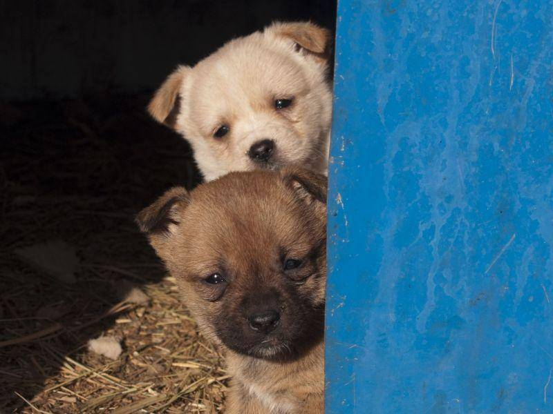 ... weil Hundegeschwister zu zweit viel mutiger sind — Bild: Shutterstock / chamski