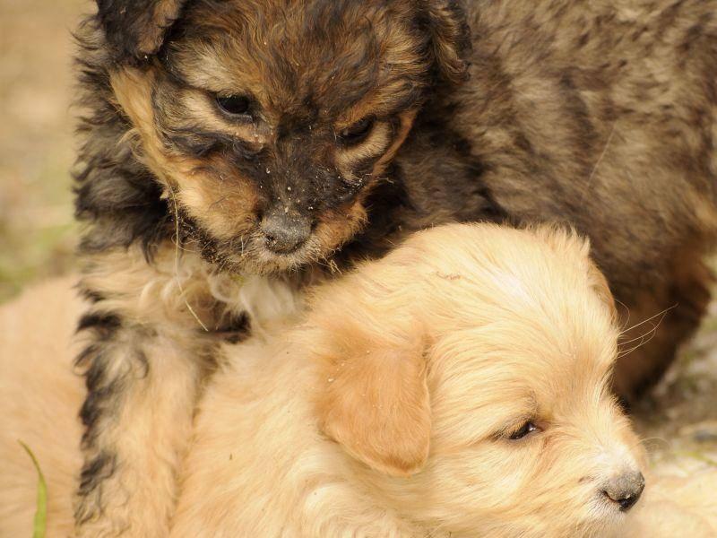 ... und weil Hundegeschwister immer da sind, wenn man sie braucht — Bild: Shutterstock / Dusica