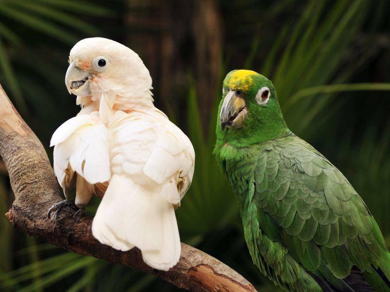 Dieses Vogelpaar beweist: Gegensätze ziehen sich an — Bild: Shutterstock / glenda