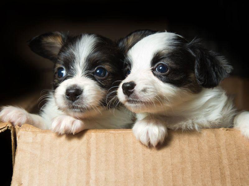 ... weil man mit Hundegeschwistern über die Aussicht plaudern kann — Bild: Shutterstock / Sergey Lavrentev