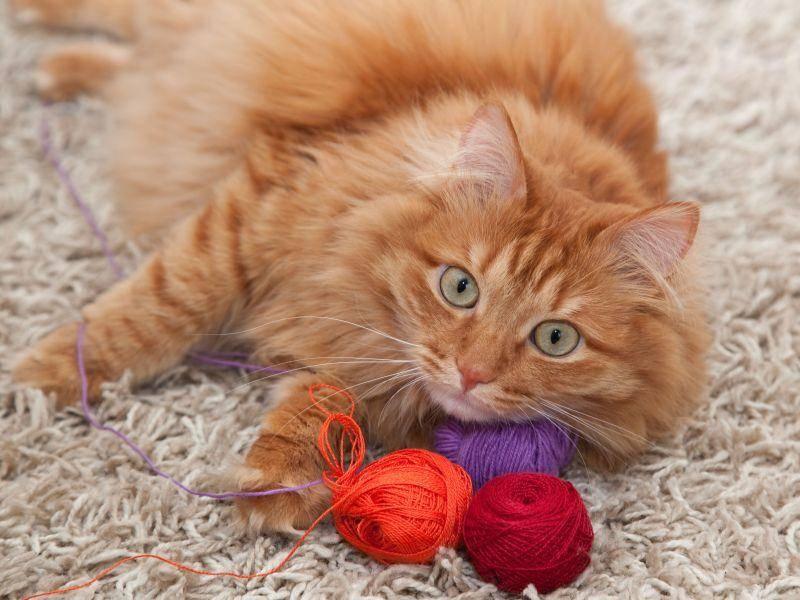 Ganz schön flauschig, dieser schöne rote Kater — Bild: Shutterstock / Olesya Kuznetsova
