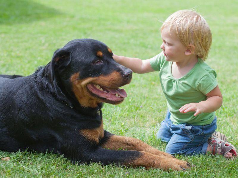 Geduldige, kinderliebe Hunde sind perfekte Spielgefährten für Kinder — Bild: Shutterstock / Dmitry Saparov