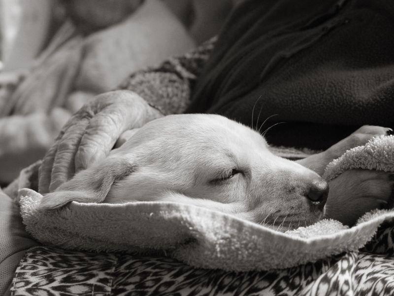 Auch in Schwarz-Weiß kann es sich ein Hund sehr gemütlich machen — Bild: Shutterstock / Sue McDonald