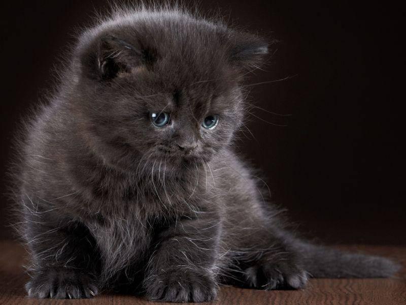 Diese süße schwarze Babykatze wird bestimmt mal ganz schön flauschig — Bild: Shutterstock / MaraZe