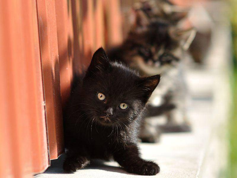 Klein, frech und abenteuerlustig: Schwarzes Katzenbaby genießt seinen Freigang — Bild: Shutterstock / Zelenenka Yuliia