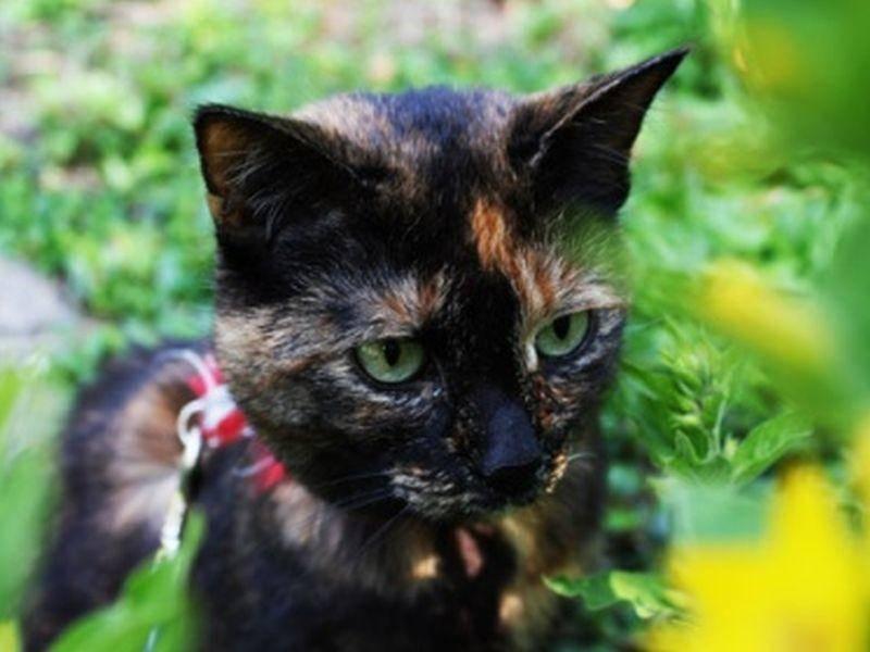 Sonnenschein: Anja Sas Katze genießt ihren Frühlingsausflug sichtlich
