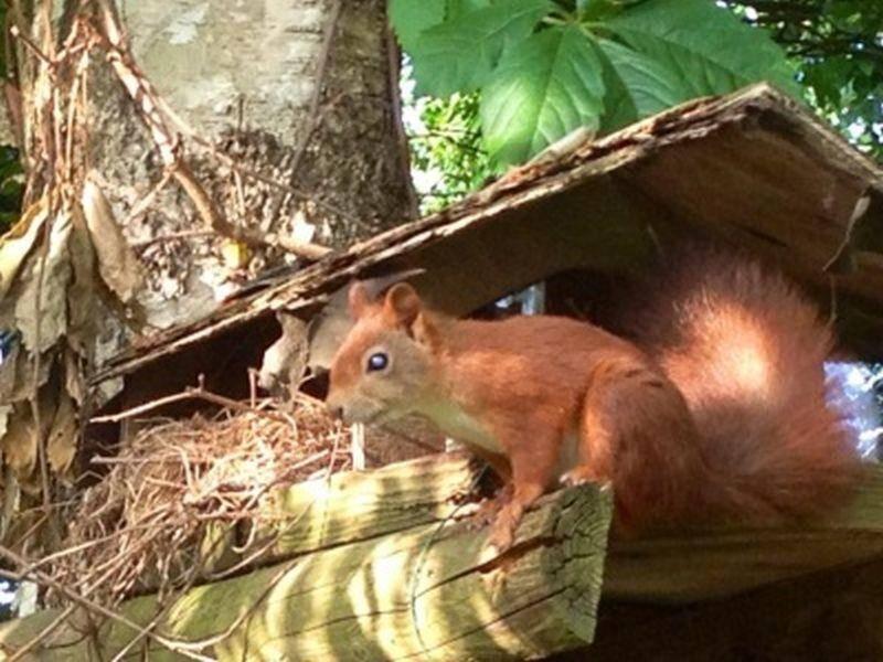 Dieses süße Eichhörnchen wurde uns von Britta Witte eingesendet