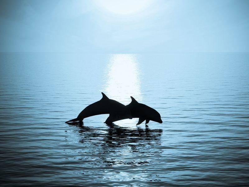 Es wird dunkel: Zeit für Delfine, um nach Hause zu schwimmen — Bild: Shutterstock / megainarmy