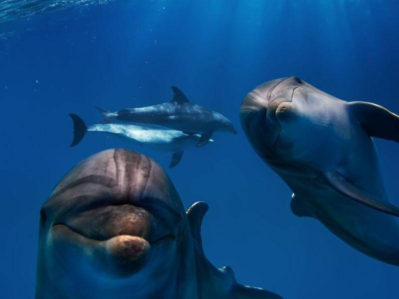 Zum liebhaben: Süßer Delfinblick in die Kamera — Bild: Shutterstock / Willyam Bradberry