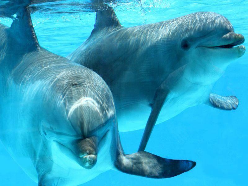 Ganz nah: So würde es aussehen, wenn man mit Delfinen schwimmt — Bild: Shutterstock / eZeePics Studio