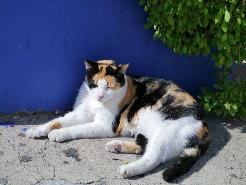 Tolle Katze: Warum nur eine Farbe, wenn drei so hübsch aussehen? — Bild: Shutterstock / InavanHateren