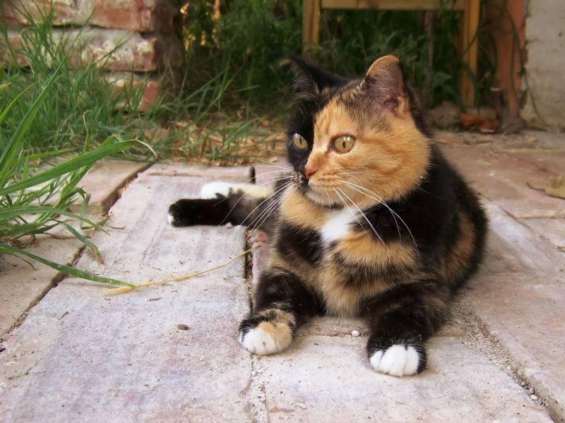 Ein Platz in der Sonne: Dreifarbige Katze beim gemütlichen Päuschen — Bild: Shutterstock / goccedicolore.it