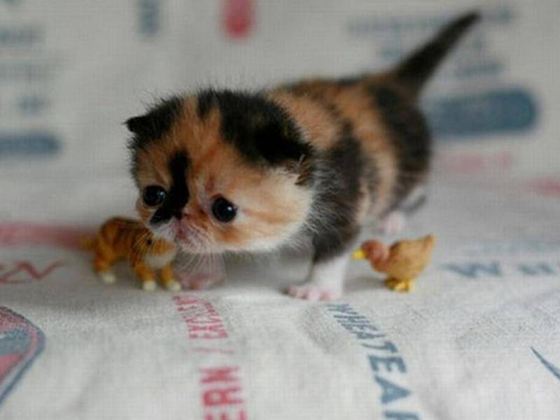 Kaetzchen-Baby-winzig