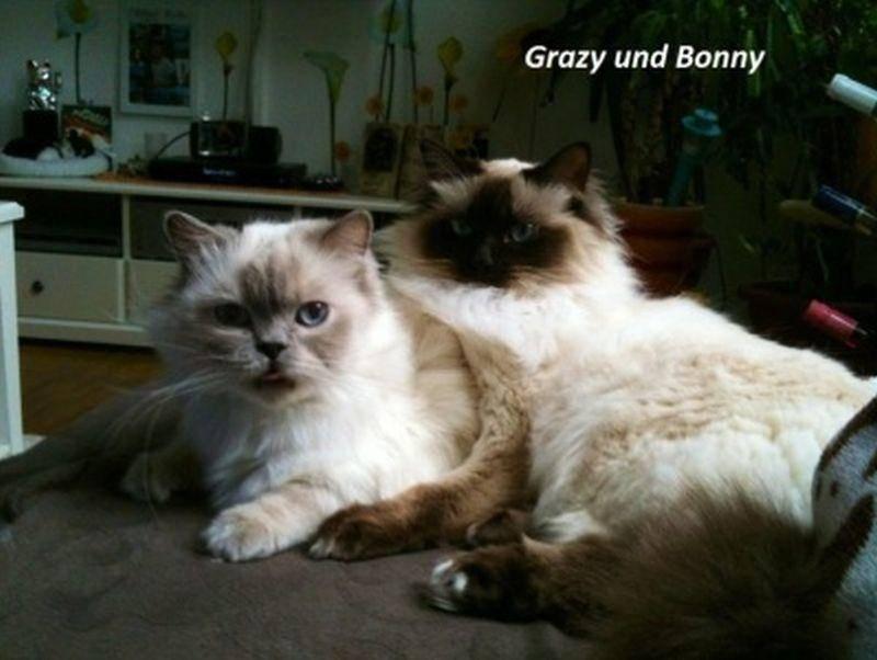 Süße Katzenfreundschaft, eingefangen von Michi Belger
