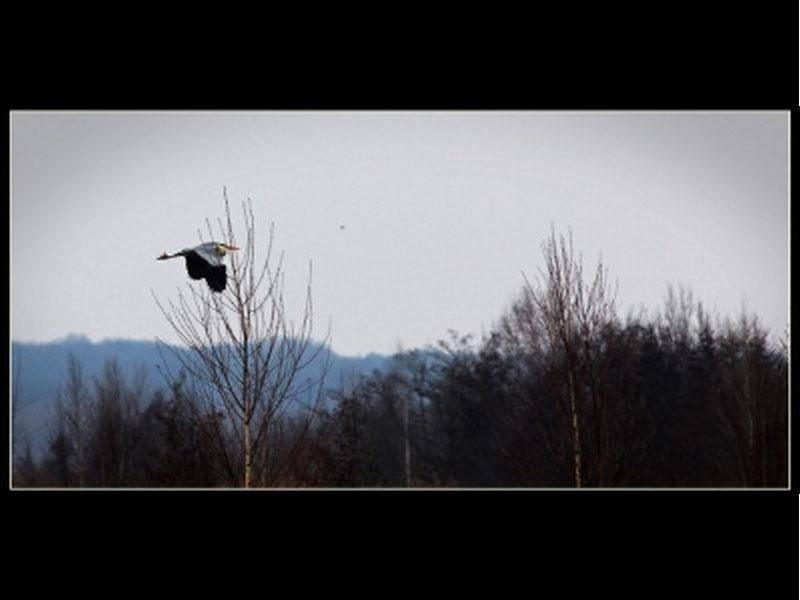 Dieser faszinierende Vogel wurde von Rocco Merker fotografiert