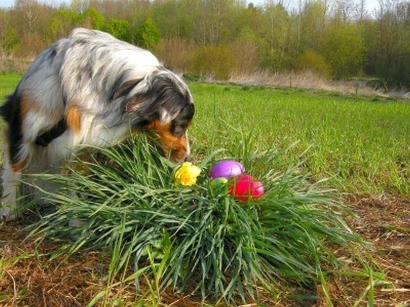 Platz 3: So sieht Osterglück aus! Dieses schöne Bild wurde uns von Sandra Ilg eingesendet