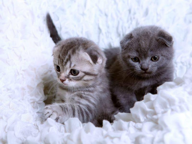 Ungleiche Geschwister: Tigerkatze und graues Kitten — Bild: Shutterstock / AnikaNes