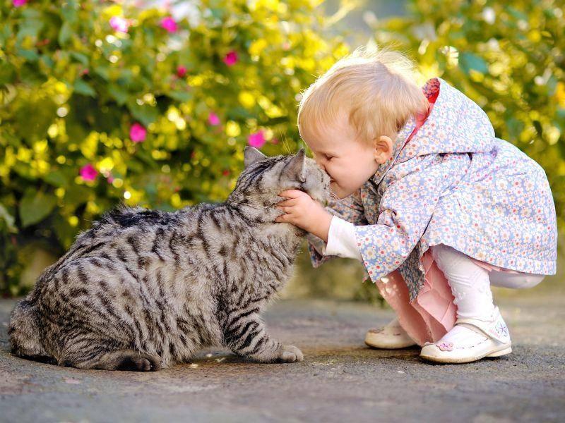 Küsschen für die Katze: auch Kleinkinder kommen oft gut mit Katzen aus — Bild: Shutterstock / Zagorodnaya