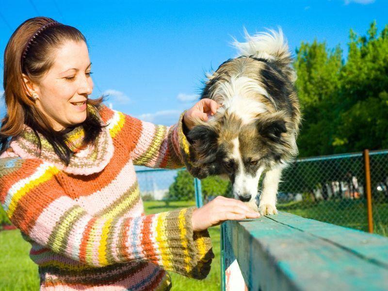 Für intelligente Hunde ist Hundetraining fast ein Muss — Bild: Shutterstock / siamionau pavel