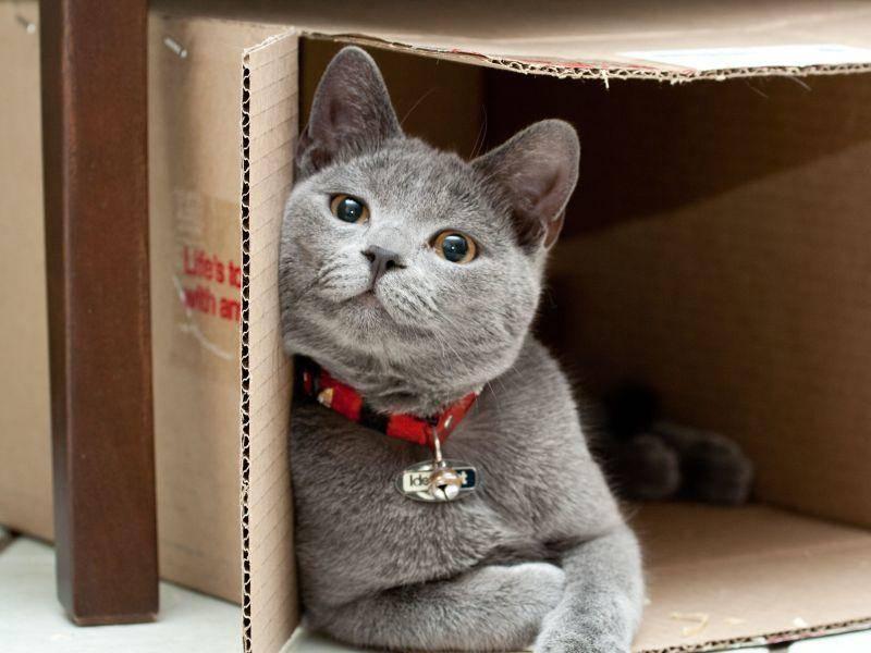 Diese Katze ist wohl stolzer Besitzer eines neuen Kartons — Bild: Shutterstock / Werner Gillmer