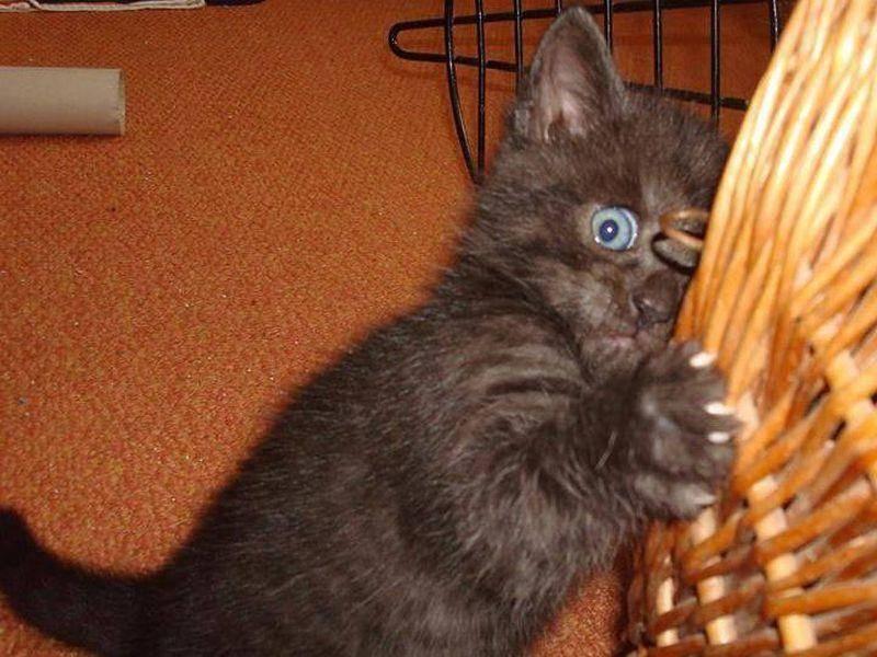 Und Hella Juhasz schwarzes Katzenbaby mag Versteckenspielen