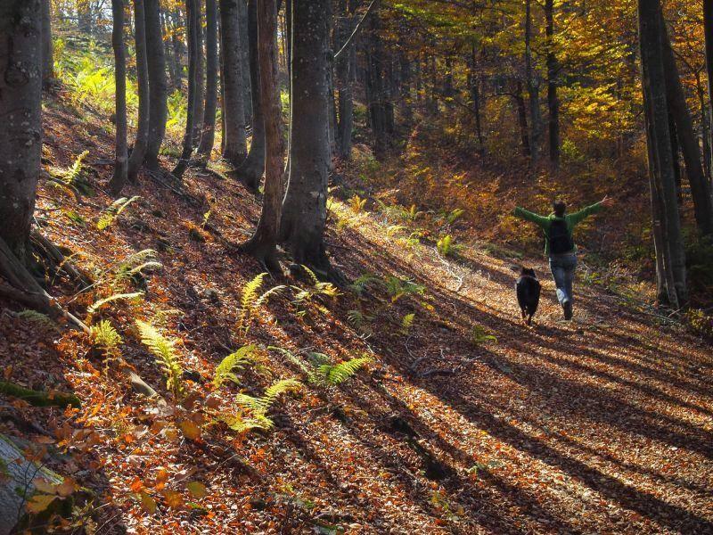 Joggen im Wald: Mit Hund ein doppelter Spaß — Bild: Shutterstock / Petar Paunchev