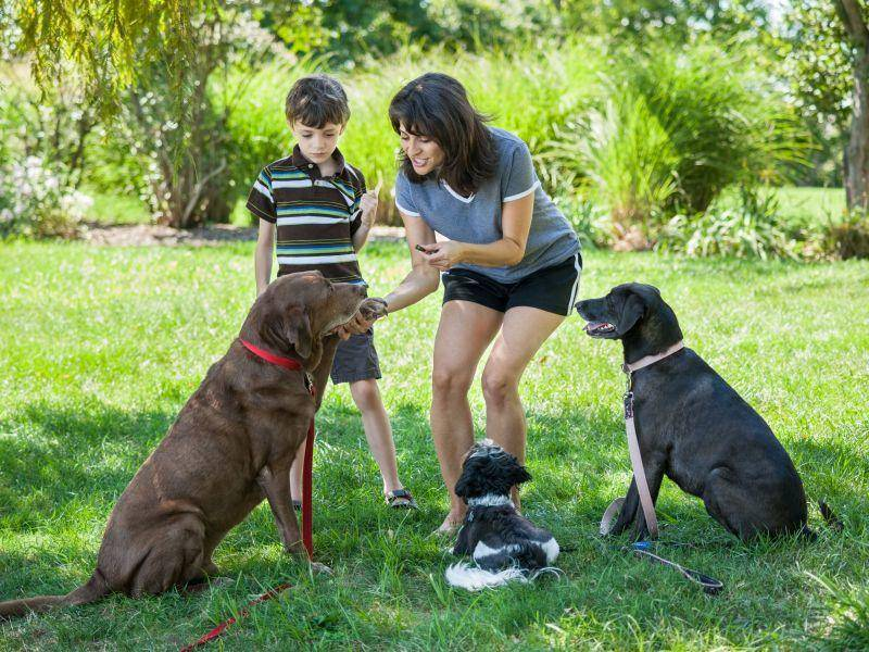 Hundetraining mit mehreren Hunden: wichtig für die Harmonie in der Gruppe — Bild: Shutterstock / eurobanks