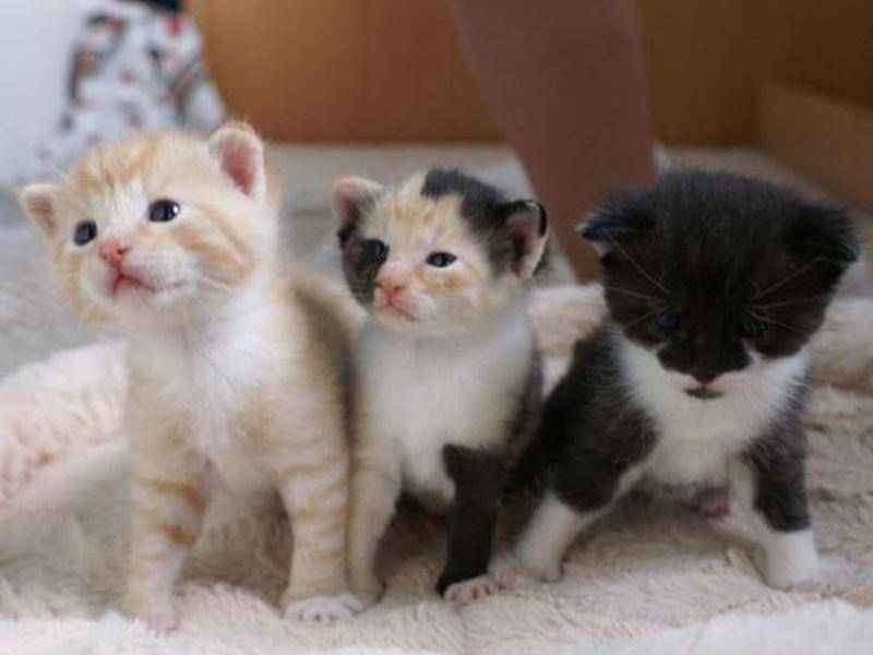 Und Karin Mosshammer-Eggers Kätzchen zeigen, wie ähnlich man sich trotz verschiedener Farben sehen kann
