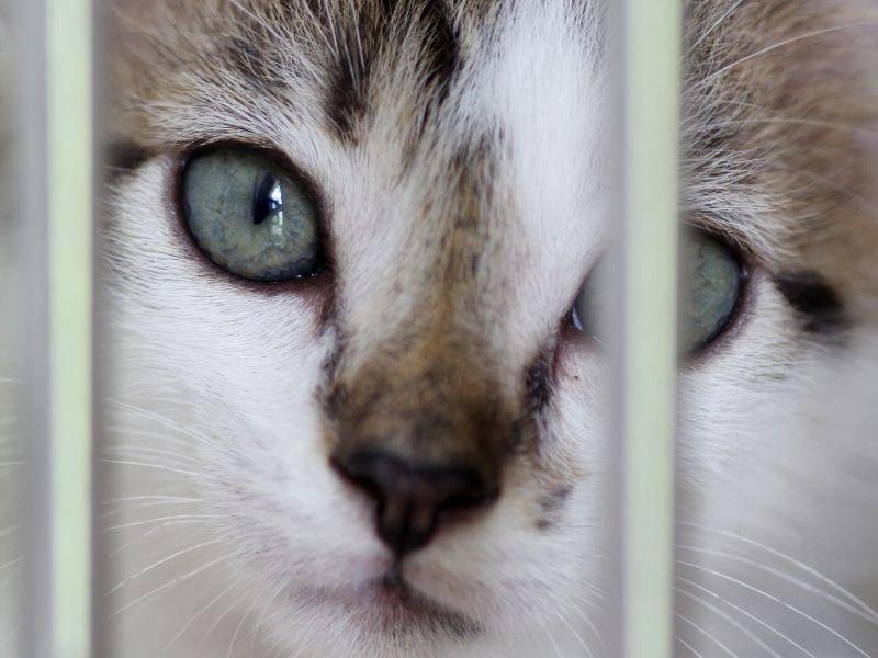 Was sieht dieses Katzenbaby mit den wunderschönen Augen wohl? — Bild: Shutterstock / shiroshiro