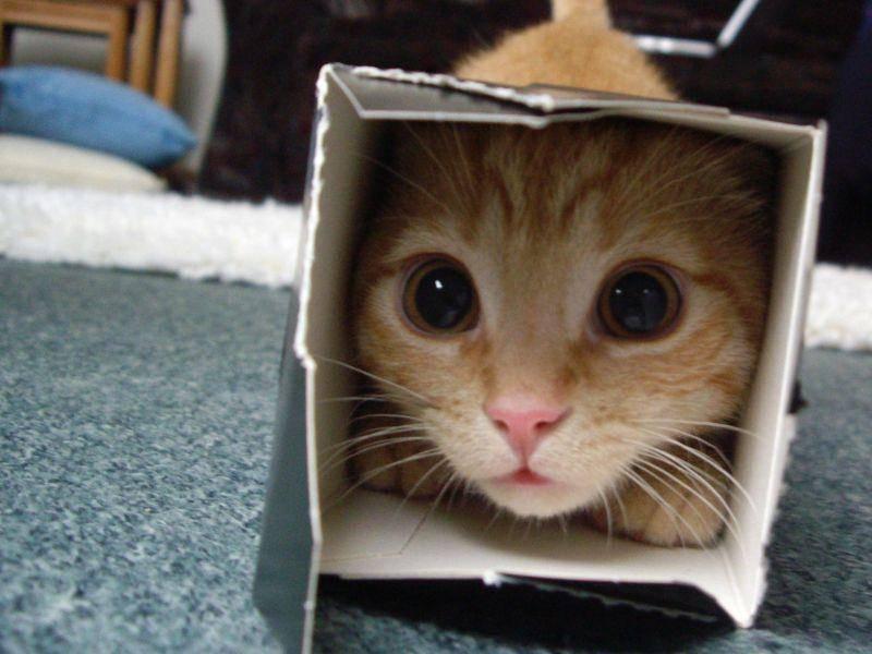 Egal wie klein der Karton ist, die Katze passt immer rein! — Bild: imgur.com