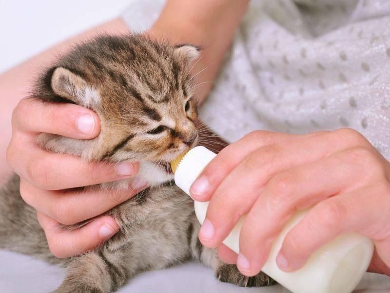 Kinder lernen mit Katzen, Verantwortung zu übernehmen — Bild: Shutterstock / Cherry-Merry