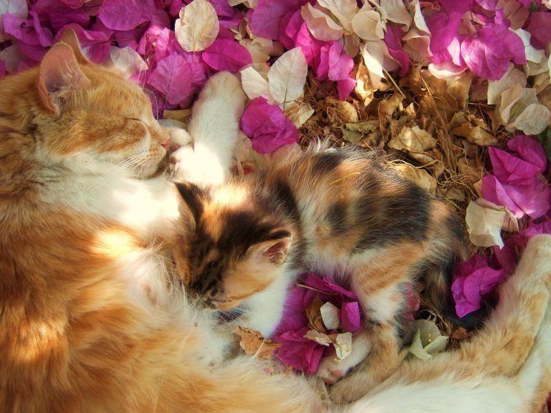Sonne, Blumen und alles, was das Herz begehrt: Diese Katzenfamilie lässt es sich gut gehen — Bild: Shutterstock / Eftyhia Mavri