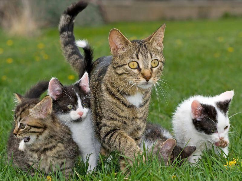 Kleiner Ausflug mit der Katzenfamilie: Ist das alles aufregend! — Bild: Shutterstock / gengirl