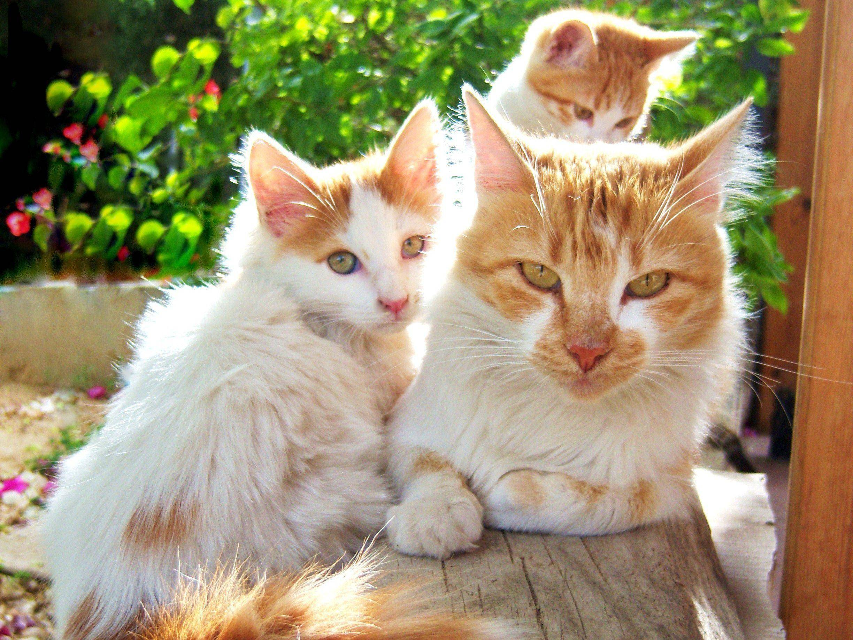 Alle mal in die Kamera gucken! Süße Katzenfamilie genießt die Sonne — Bild: Shutterstock / Eftyhia Mavri
