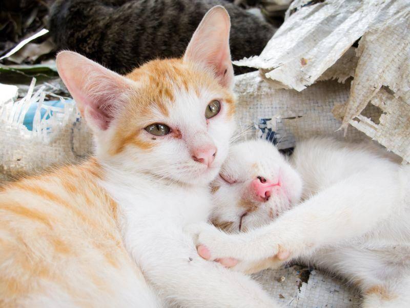 Kuschelzeit in der Katzenfamilie: Wie gemütlich! — Bild: Shutterstock / Chayatorn Laorattanavech