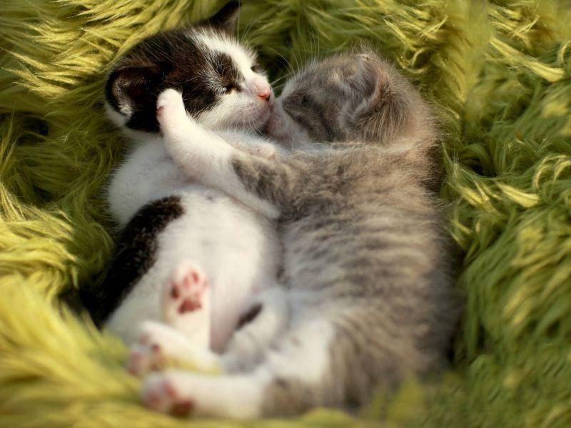 Flauscheteppich-Zeit ist Katzenumarmungs-Zeit — Bild: Shutterstock / Katrina Brown
