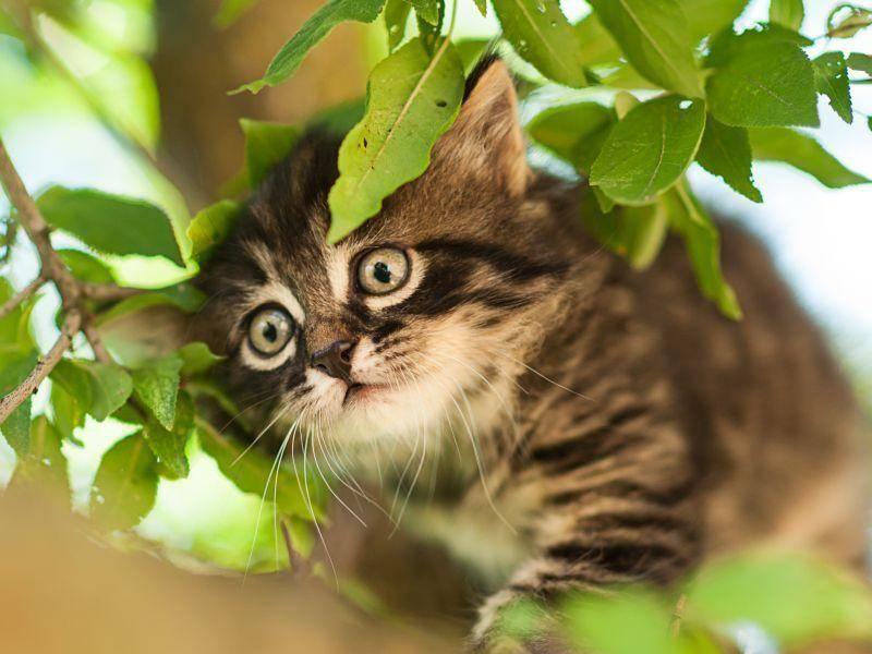 Super Ausblick, den das neugierige Katzenbaby da oben hat — Bild: Shutterstock / Zelenenka Yuliia