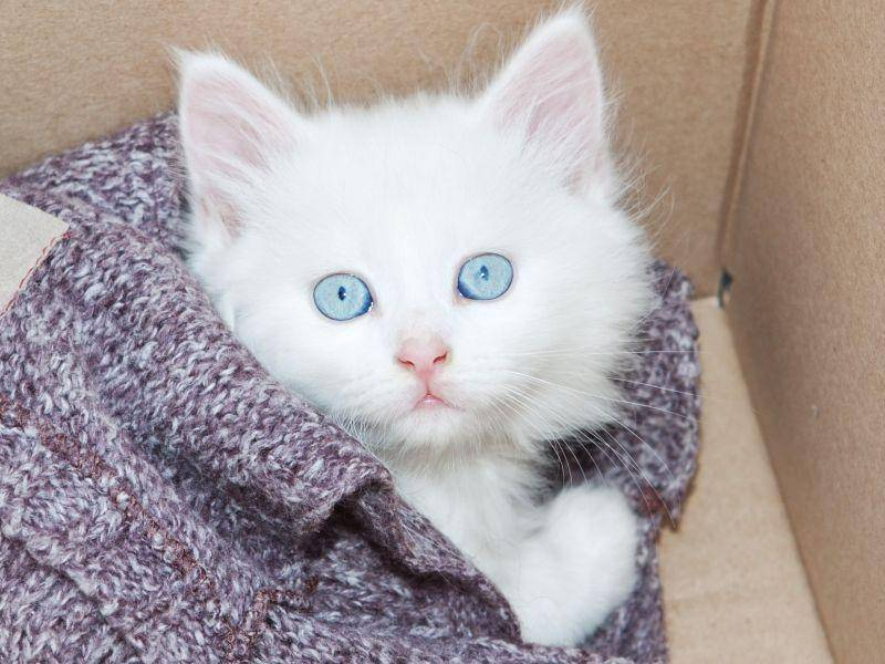Dieses Katzenbaby guckt im wahrsten Sinne des Wortes neugierig aus der Wäsche — Bild: Shutterstock / Sergio Stakhnyk
