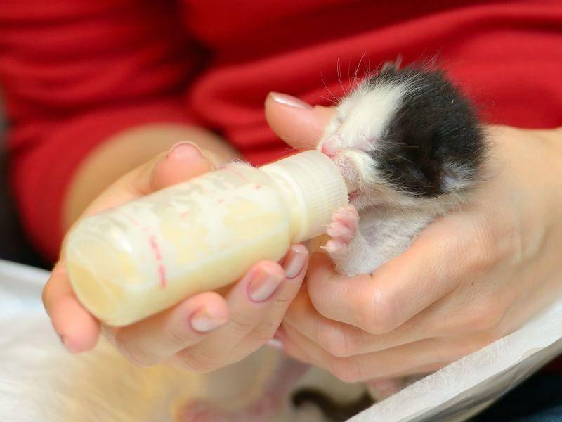 Das kleinste Flaschenkind in unserer Katzenbaby-Runde — Bild: Shutterstock / Geanina Bechea