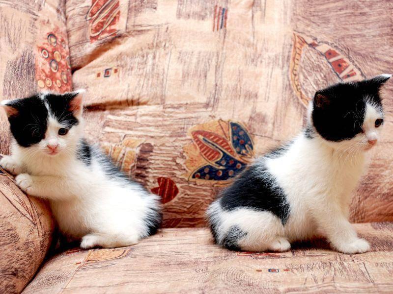 Gleiche Eltern, gleiches Muster: Abenteuerlustige Katzenbabys — Bild: Shutterstock / Nadina
