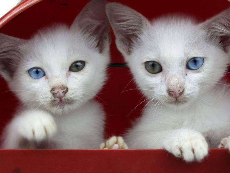 Wunderschön, diese beiden Katzenbabys — Bild: Shutterstock / Tengku Mohd Yusof bin Tg. Su