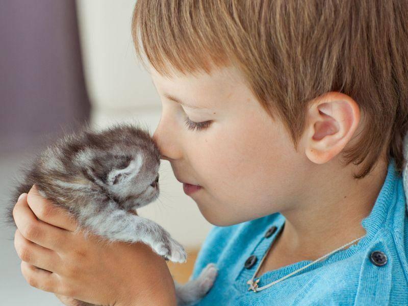 Kind und Katze — Beginn einer langen Freundschaft? — Bild: Shutterstock / Nuzza