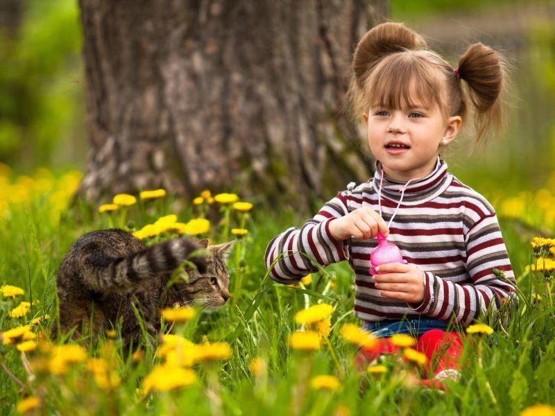 Ein Platz in der Sonne für Kind und Katze — Bild: Shutterstock / Dmitry Berkut