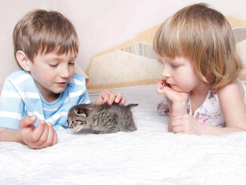 Früh aneinander gewöhnen: Schön für Kind und Katze — Bild: Shutterstock / Elena Yakusheva