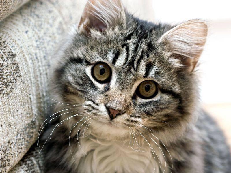 Kuscheln! Sagen diese süßen Katzenaugen — Bild: Shutterstock / Alon Brik