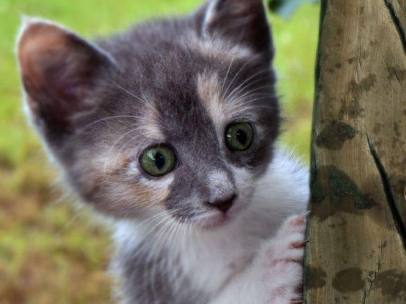 Was sieht dieses neugierige Katzenbaby wohl? — Bild: Shutterstock / Mark Shearin Images