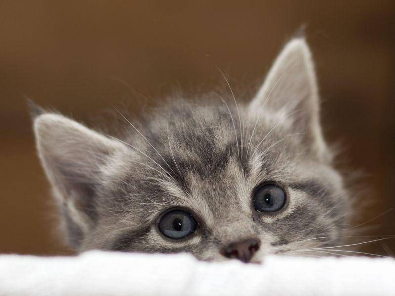 Wie süß! Dieses neugierige Katzenbaby ist einfach zum Verlieben — Bild: Shutterstock / AnnaIA