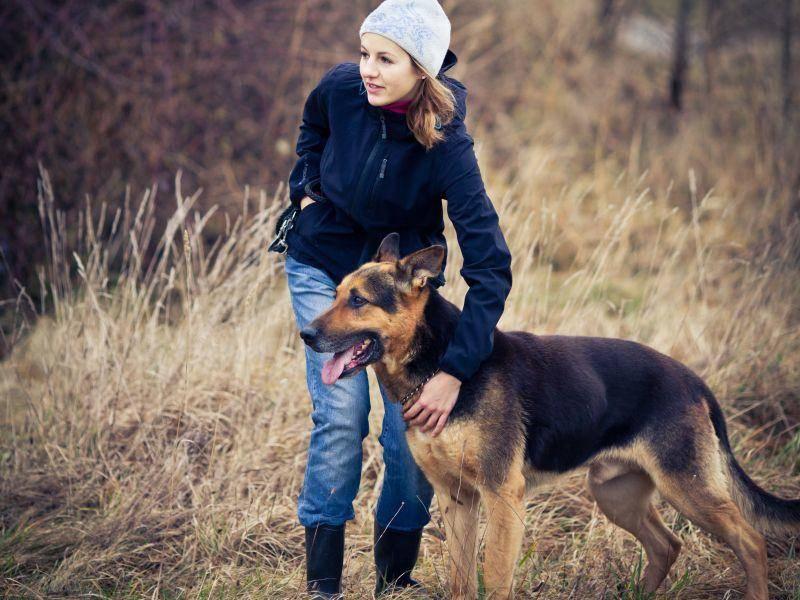 Auf einen Hund, der durch ein gutes Hundetraining gegangen ist, kann man sich verlassen — Bild: Shutterstock / l i g h t p o e t