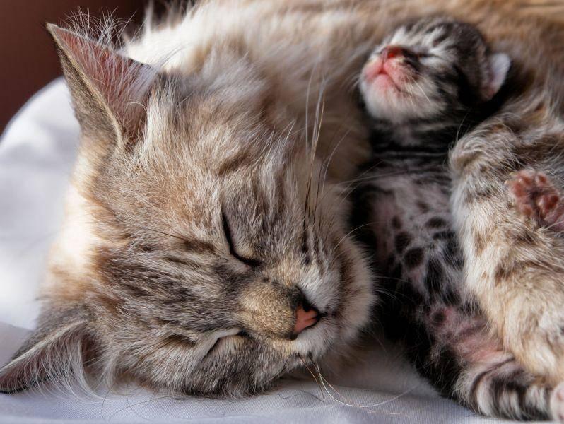 Süße Katzenumarmung: Auch im Schlaf kein Problem — Bild:Shutterstock / Orhan Cam