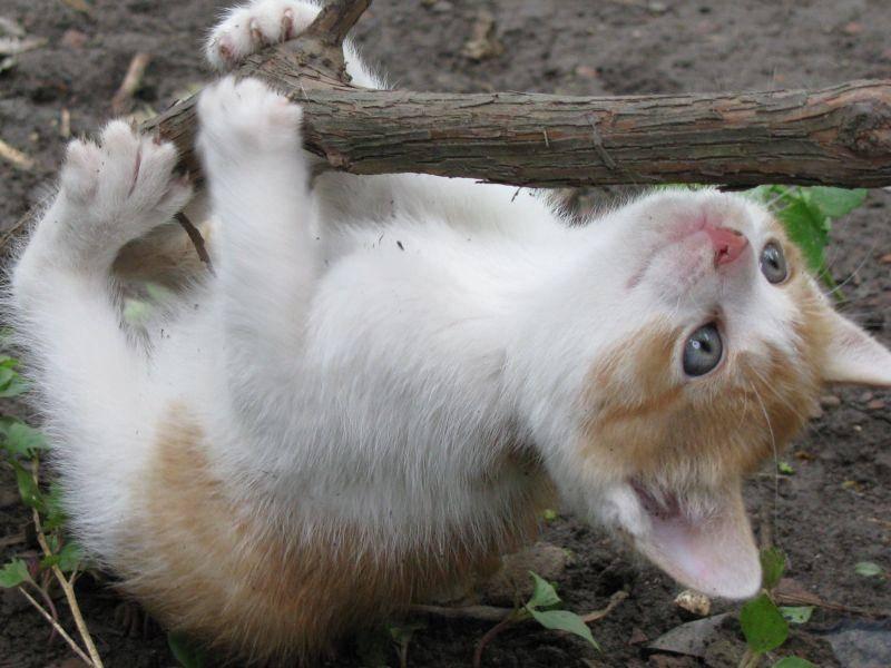 So manches Katzenbaby muss hoch hinaus, um seine Neugier zu stillen — Bild: Shutterstock / Sorina Madalina Androne